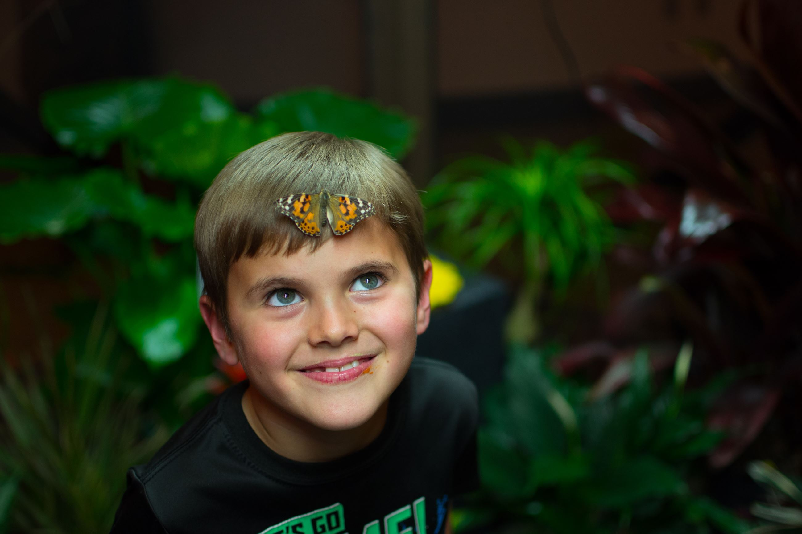 Kid with butterfly on face