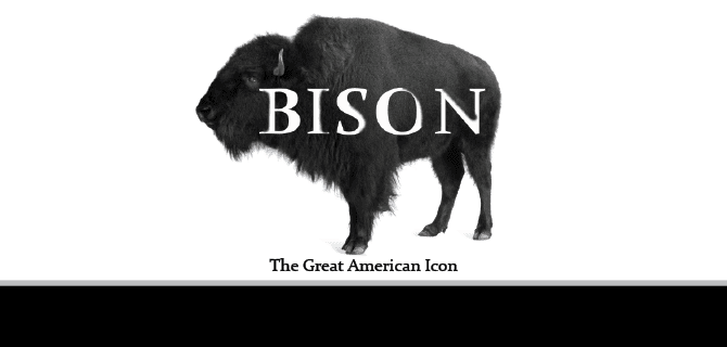 Bison, A temporary exhibit at Flint Hills Discovery Center