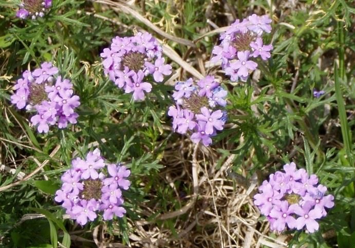 Purple Bunched Flowers